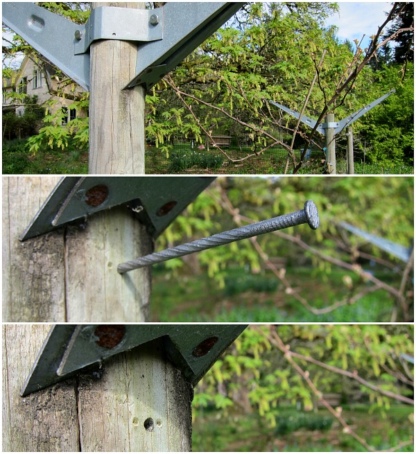 geneva trellis for grapes mason orchard bees