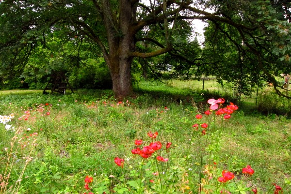 Last year's meadow is beginning to take shape. but regularly pull brambles.
