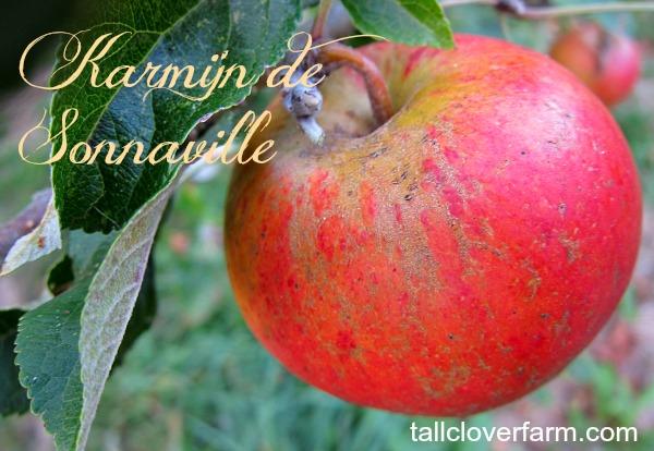 Karmijn de Sonnaville apple
