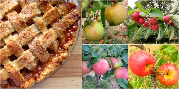 Fresh apples=Fresh pie