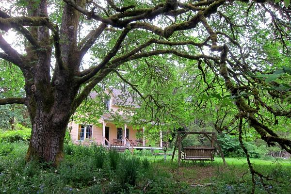 farmhouse and maple