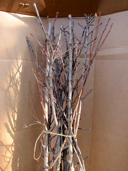 bundle bareroot trees