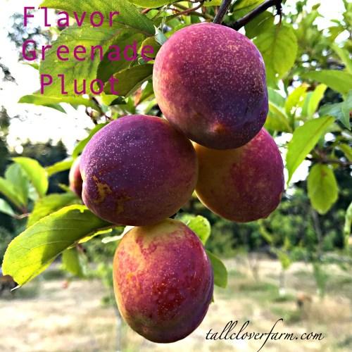 flavor grenade pluot plum