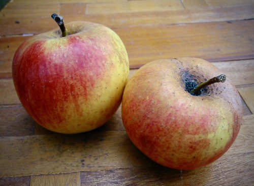 belle de boskoop apple