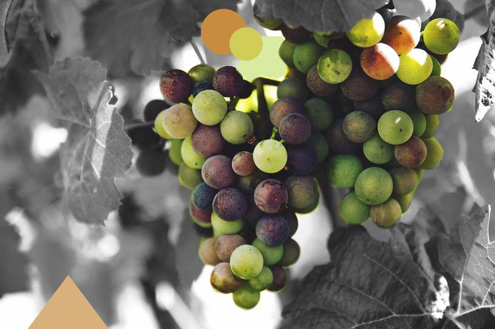 La cura de la uva: la monodieta depurativa, energizante y desintoxicante ideal para el otoño