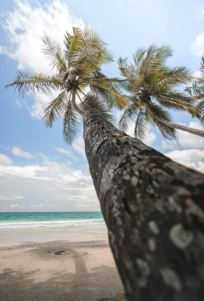 Flight deal! From Paris to Martinique for €266 return!