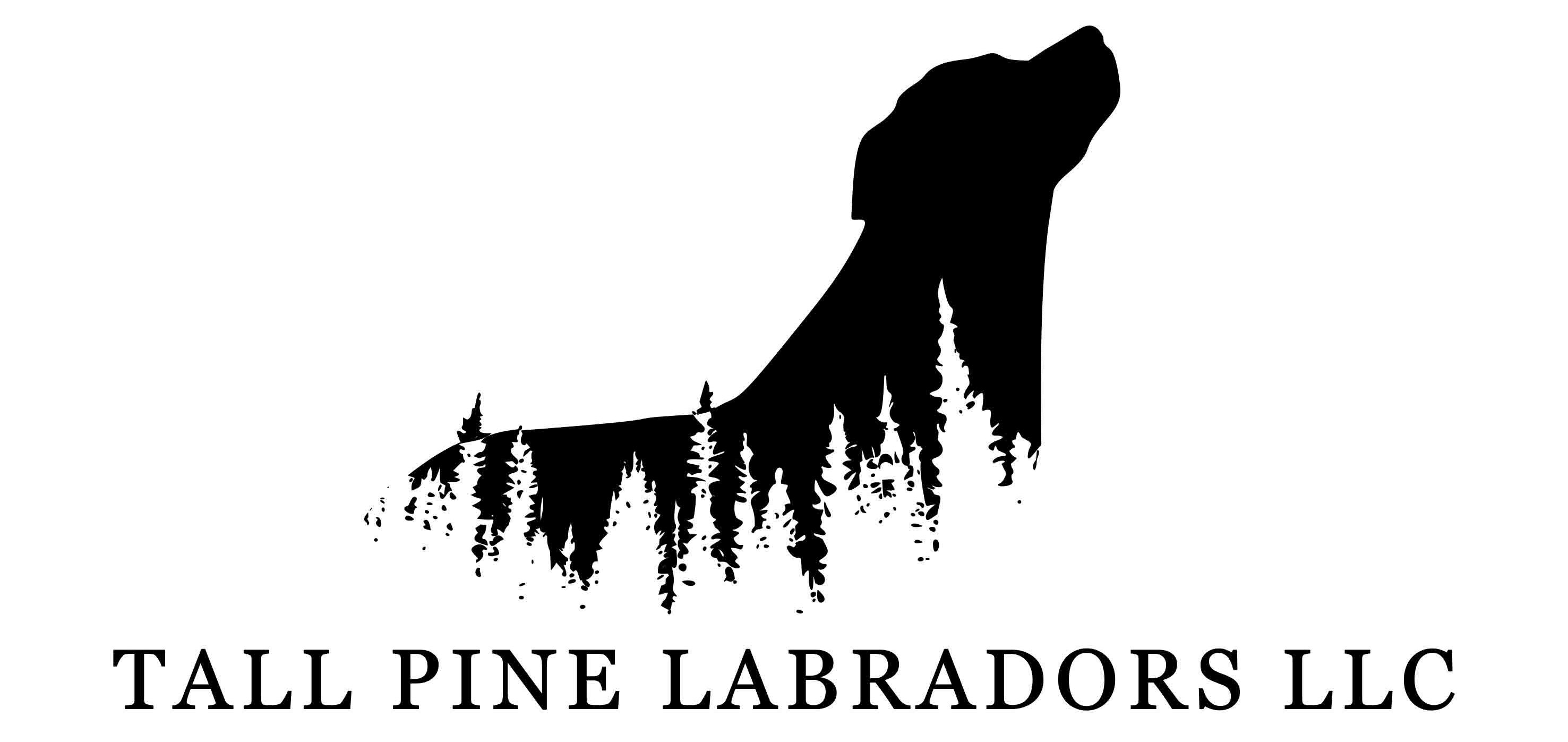 Tall Pine Labradors LLC