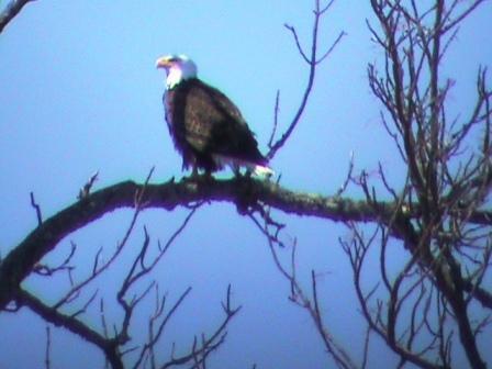 Jon's eagle2