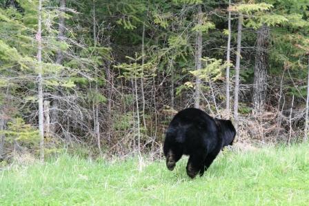 Running bear2comp