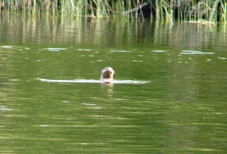 They said this otter was really cussing them out!