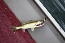 anniversarymyfish