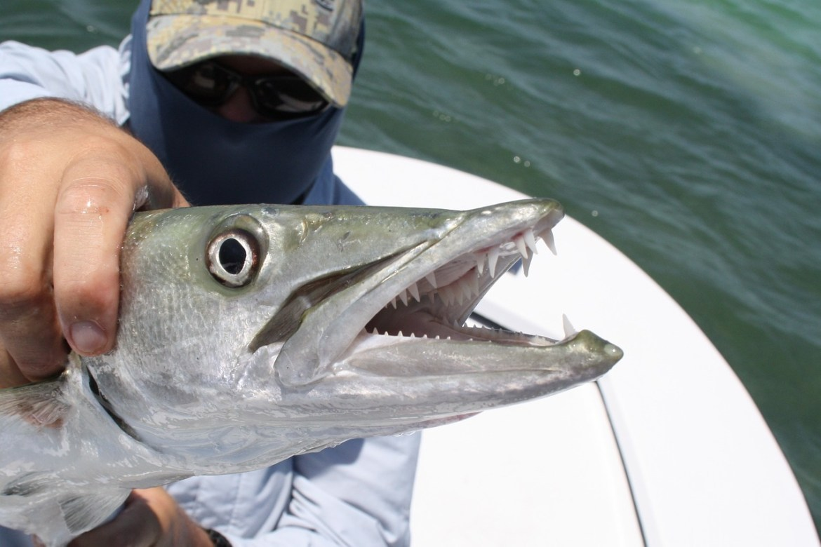 Where to Find the Best Fishing Places in Florida