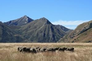 Vistas like this scream 'South Island high country' to me