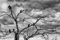 Birds around Lake Rotorua