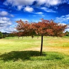 Tree, Government Gardens, Rotorua