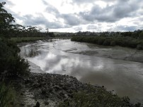 Kaipara River at low tide