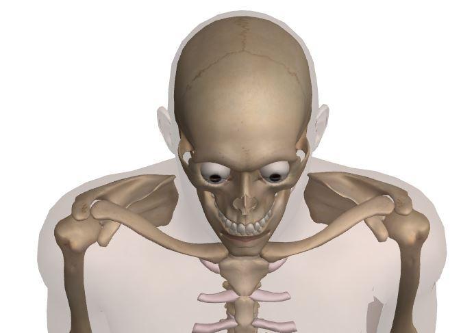 肩甲骨 (前面斜め上).JPG