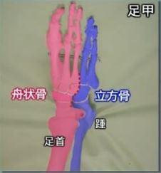 足の骨の構造.JPG