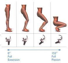 Knee flexed.jpg