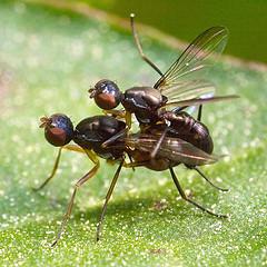 bug-sex