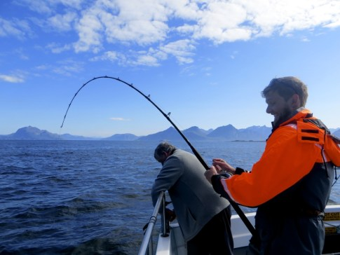 Reeling in the halibut
