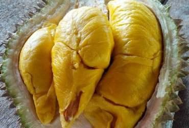 Daging Buah Durian Musang King