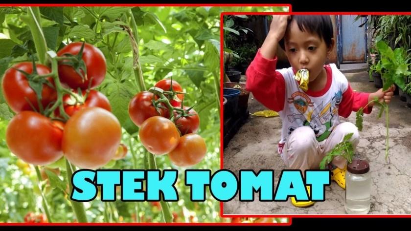 Stek Tunas Air Tomat