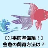 事前準備編! 金魚の飼育方法は?