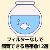 フィルターなしで飼育できる熱帯魚12選