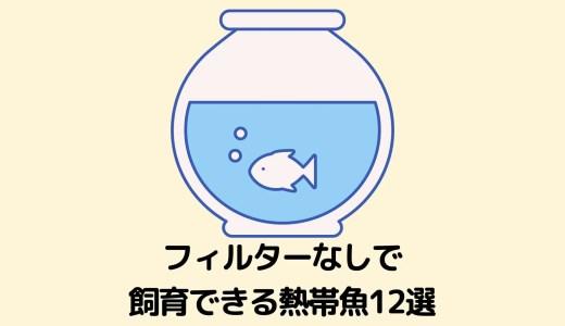 【ボトリウムにもおすすめ】フィルターなしでも飼育できる熱帯魚12選【注意事項あり】