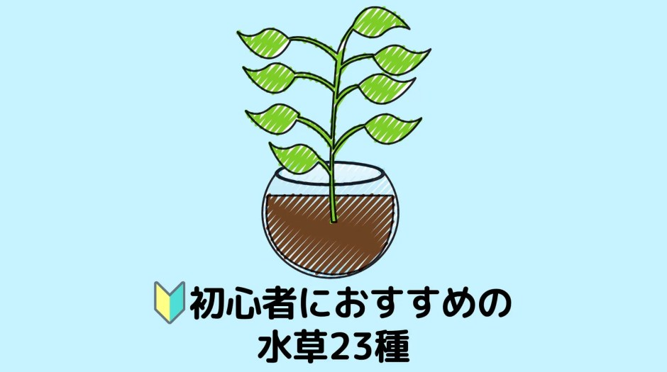 初心者におすすめの水草23種