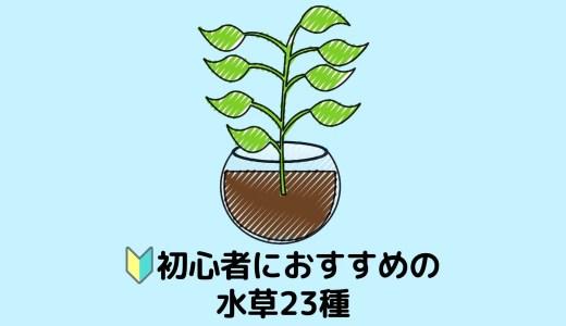 【23種を紹介!】CO2なしでも育てやすい初心者におすすめの水草