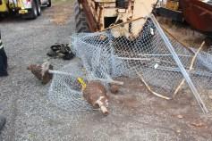Tractor Trailer Overturns, US209, SR93, Nesquehoning, 11-5-2015 (33)