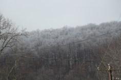 winter-wonderland-ice-on-trees-along-sr54-and-interstate-81-barnesville-1-24-2017-10