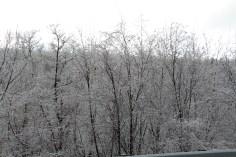 winter-wonderland-ice-on-trees-along-sr54-and-interstate-81-barnesville-1-24-2017-20