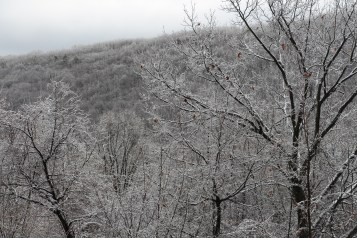 winter-wonderland-ice-on-trees-along-sr54-and-interstate-81-barnesville-1-24-2017-24