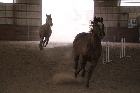 horses-at-horses-and-horizons-therapeutic-learning-center-west-penn-1-21-2017-25
