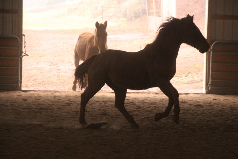horses-at-horses-and-horizons-therapeutic-learning-center-west-penn-1-21-2017-55