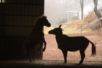 horses-at-horses-and-horizons-therapeutic-learning-center-west-penn-1-21-2017-67