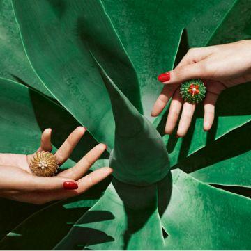 Cactus De Cartier 2