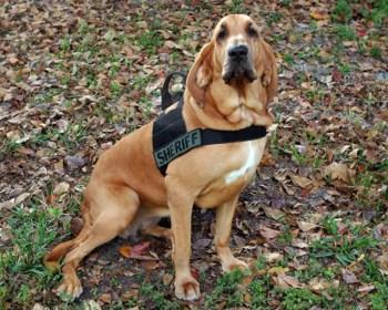 Canine Unit Broward Sheriff's Office