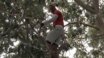 Golfer caught in tree