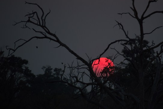 Sunset, Moremi National Park, Botswana