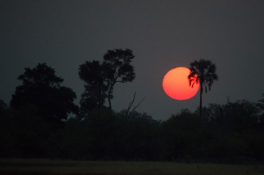 Sunrise, Moremi National Park, Botswana