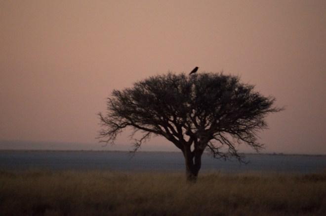Africa, salt pans