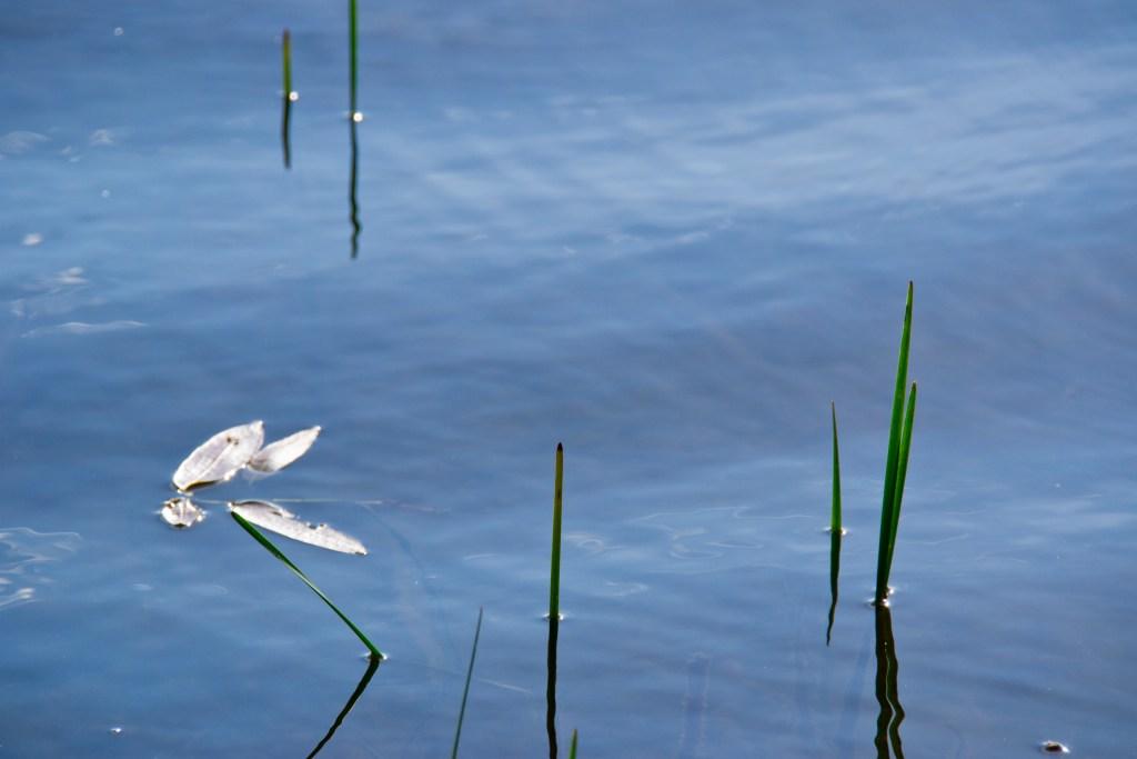 Bottineau, North Dakota, Pelican Lake