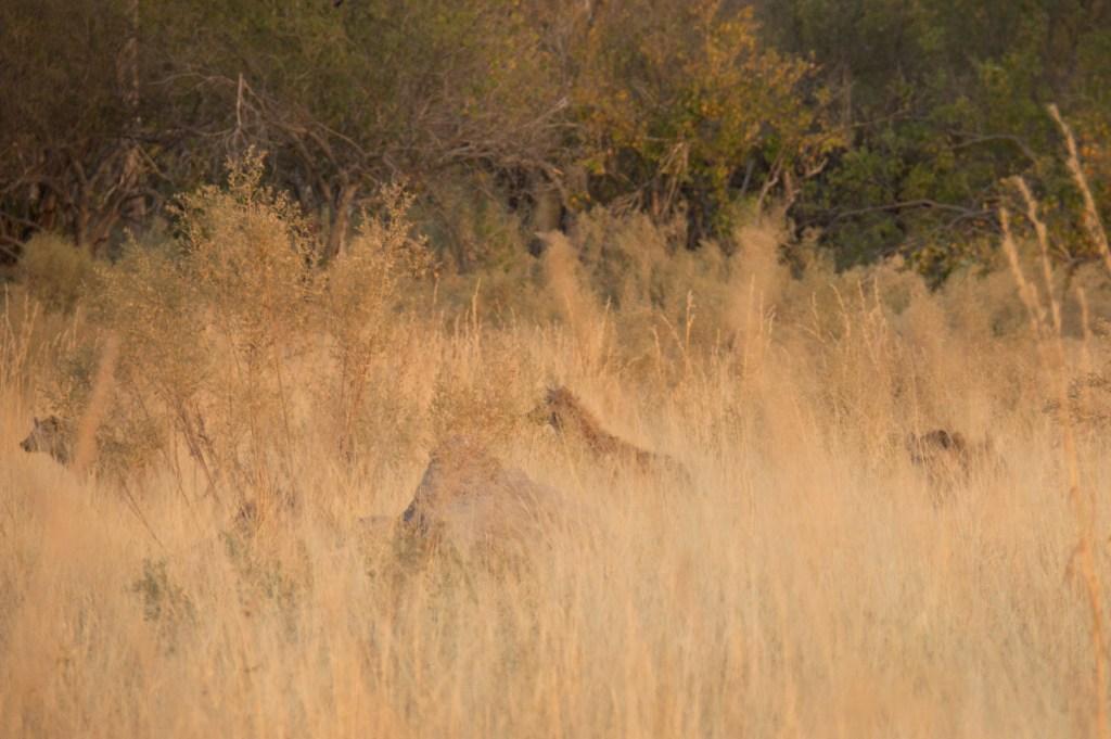 Moremin National Park, Botswana