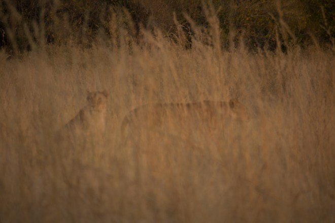 Moreni National Park, Botswana