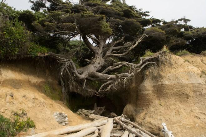 trees, hanging on, undercut, undermined, sale, sales