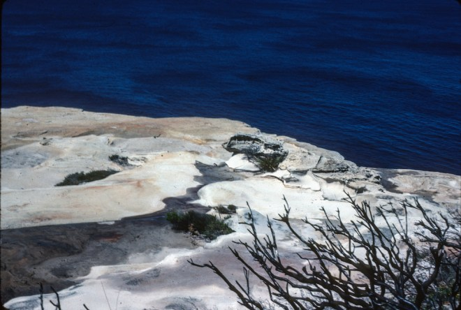 Royal National Park, New South Wales, sale, sales